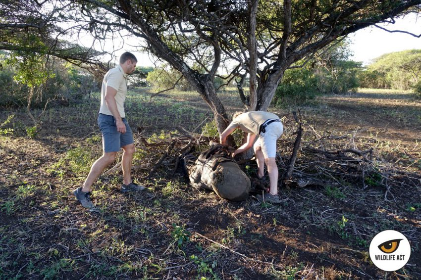 Equipo de Wildlife ACT situando el cebo para los leones