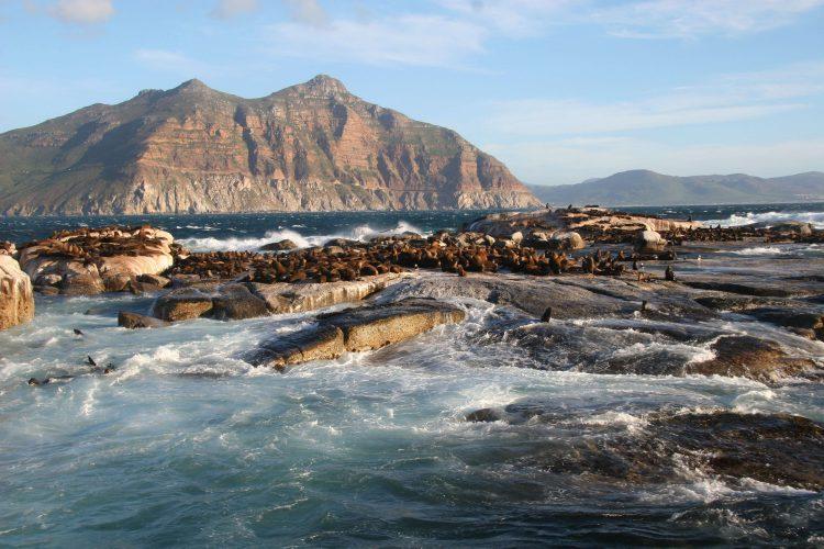 La colonia de lobos marinos de la isla Duiker