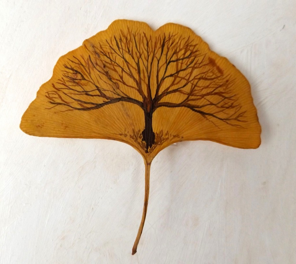 Gingko tree-leaf