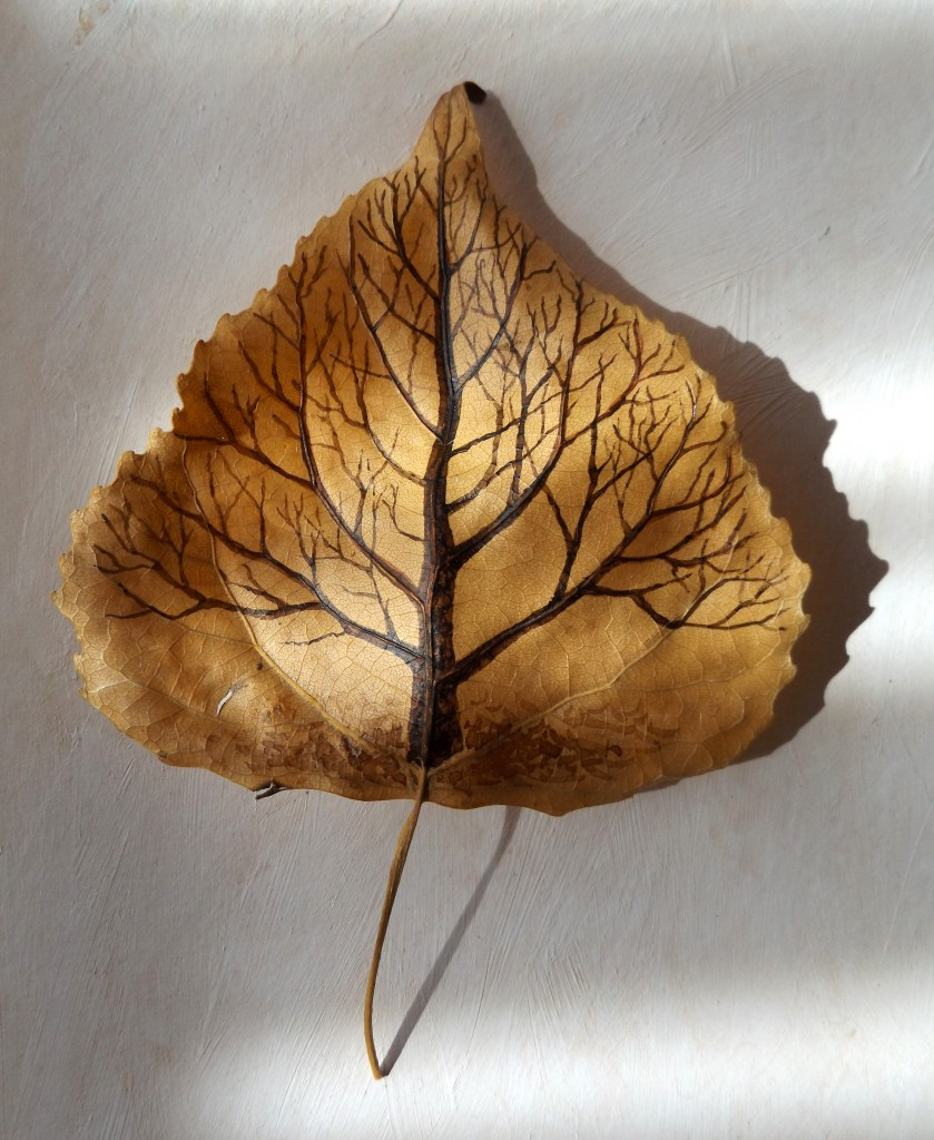 Black poplar leaf-tree 3D