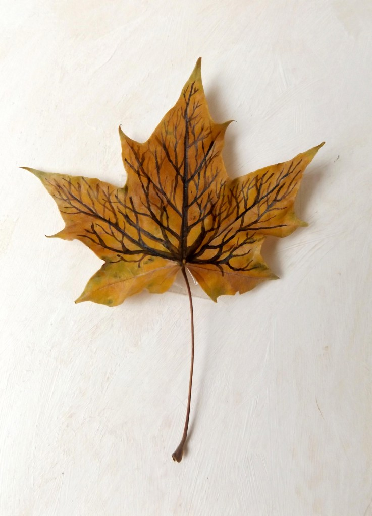 Maple tree-leaf