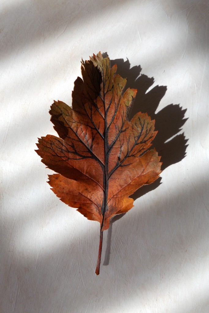 Swedish whitebeam tree-leaf 3D