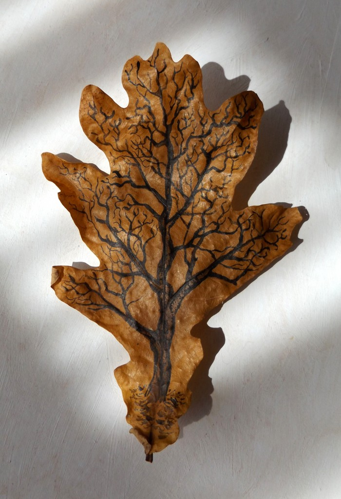 Oak tree-leaf 3D