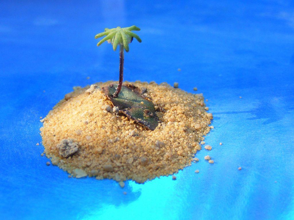 Marchantia polymorpha liverwort 27 july 2016 s5700 022