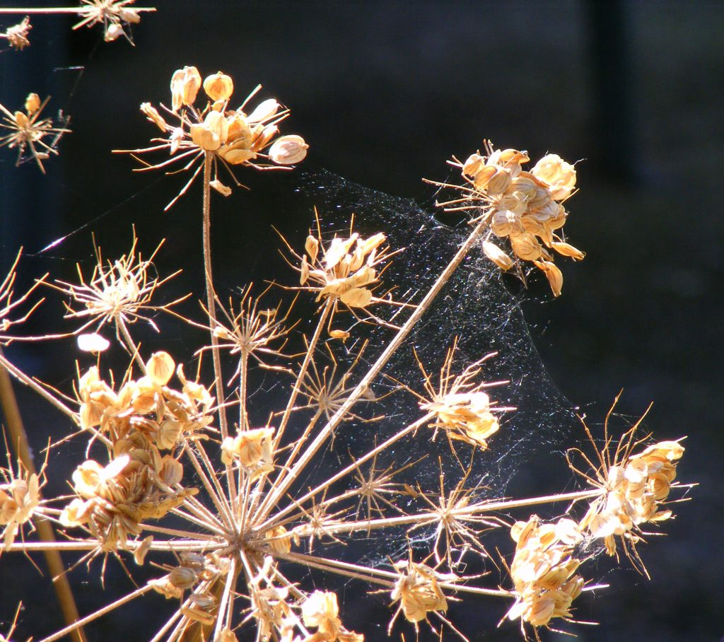 dried-flowers-11-september-2016-3
