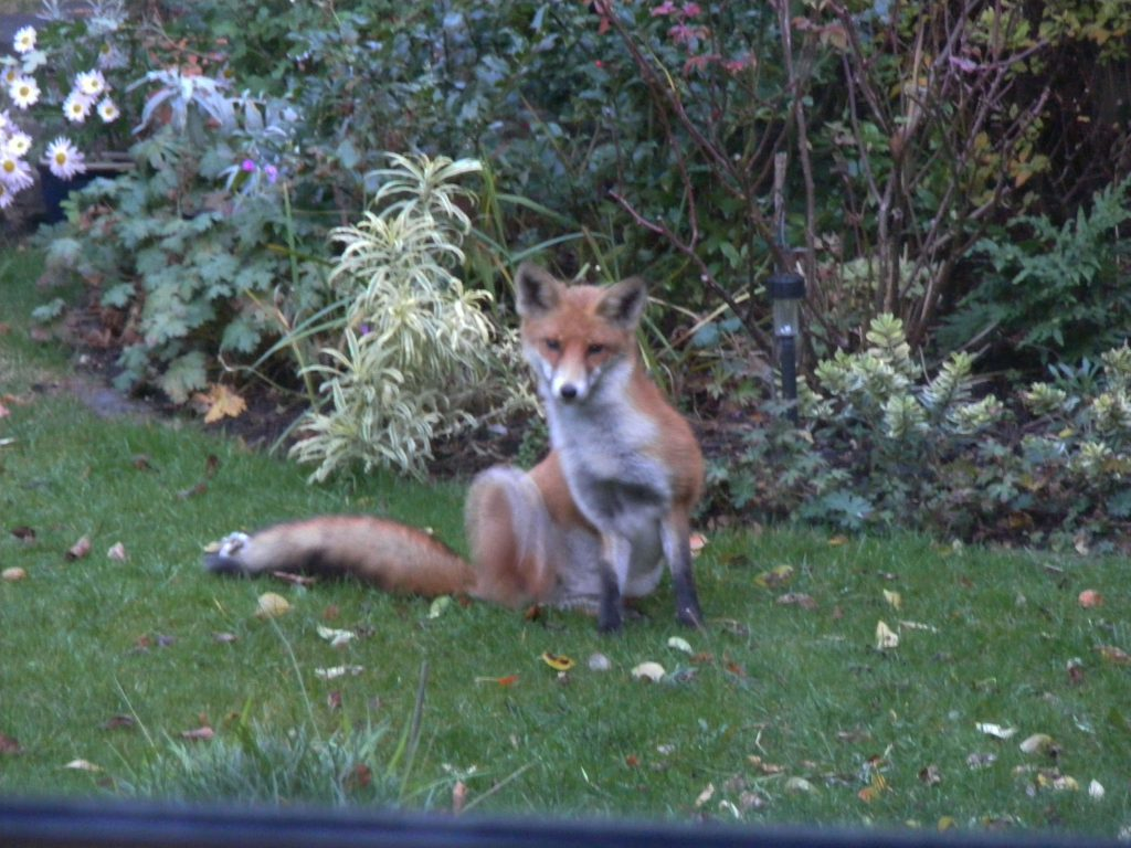 fox-20-november-2016-011