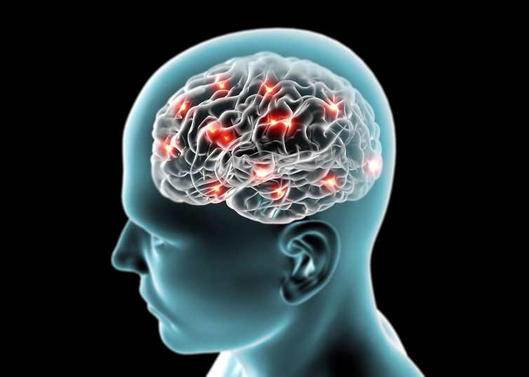 Un réservoir de cellules dans notre cerveau