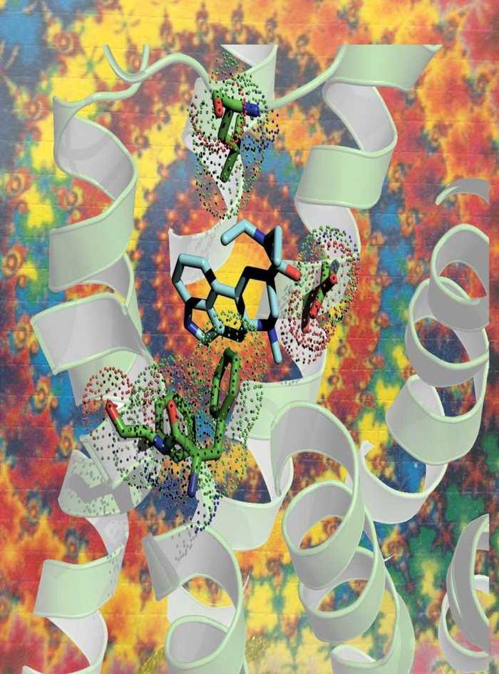 Une représentation artistique du LSD (en bleu) qui se connecte à un récepteur de sérotonine (le ruban blanc) - Crédit : Bryan Roth