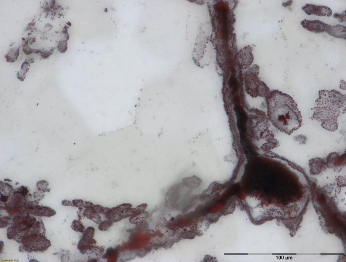 Un filament d'hématite attaché à un amas de fer sur le coté inférieur droite qui provient des cheminées hydrothermales. Ces amas de fer et ces filaments étaient des cellules microbiales et elles sont similaires à celles qu'on trouve aujourd'hui dans les cheminées hydrothermales - Crédit : M. Dodd.
