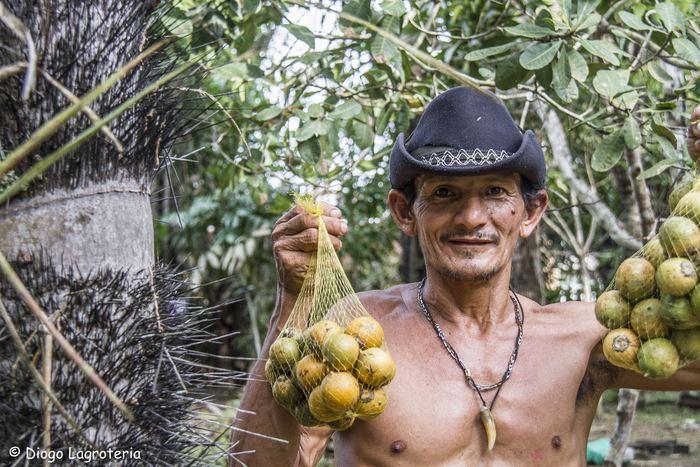 Des fruits de l'Astrocaryum aculeatum, une espèce d'arbre domestiqué dans un village rural à Itapiranga. Ce palmier est fréquemment présent dans les villages dans le centre de l'Amazonie - Crédit : Diogo Lagroteria