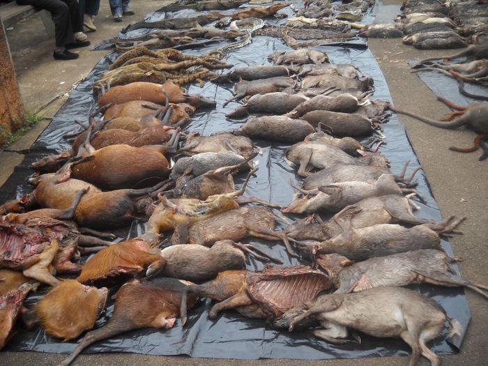 Saisie de carcasses d'animaux au Cameroun qui provient de la chasse illégale - Crédit : © LAGA (The Last Great Ape Organization: http://www.laga-enforcement.org/)