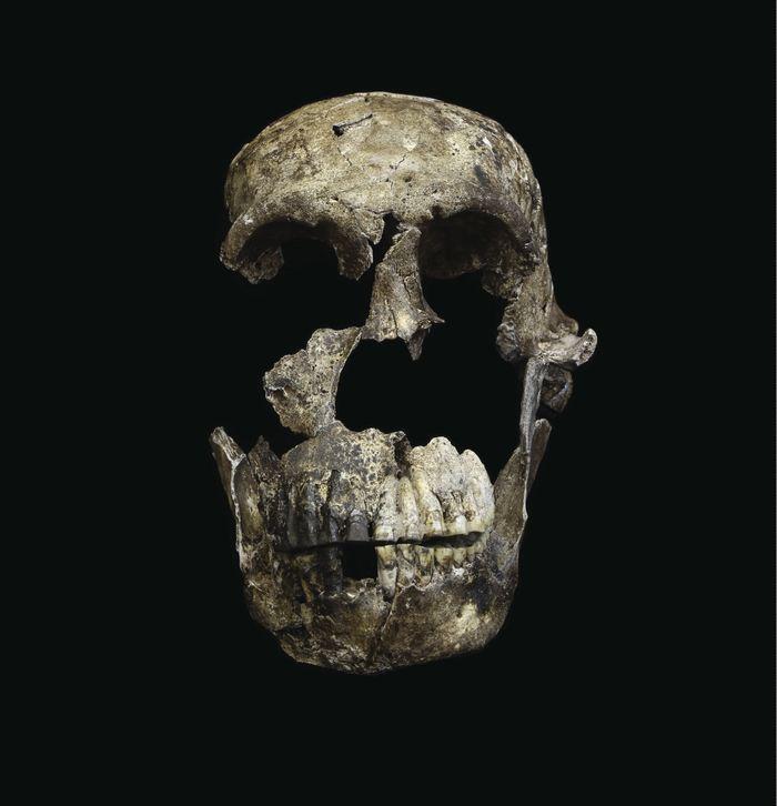 Vue frontal du crâne du squelette de l'Homo Naledi - Crédit : Wits University/John Hawks