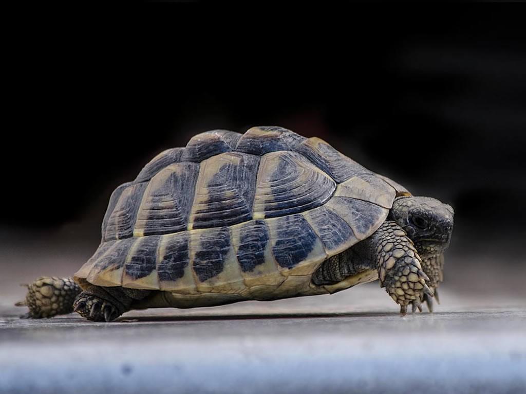 tortoise-blog