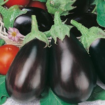 Aubergine Black Beauty Seeds
