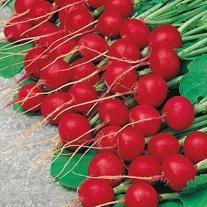 Radish Topsi Seeds