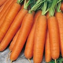 Carrot Nantes 5 Seeds