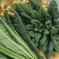 Kale Nero di Toscana Seeds