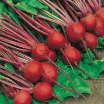 Beetroot Detroit 2 - Crimson Globe Seeds