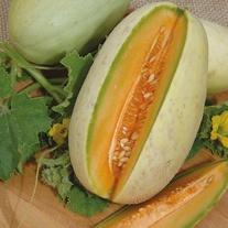 Melon Melba Seeds