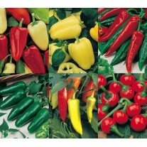 Pepper Collection