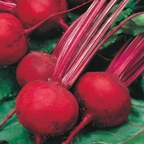 Beetroot Boltardy Seeds