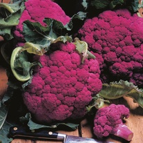 Cauliflower Graffiti F1 Seeds
