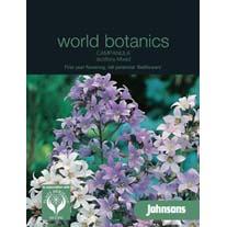 Campanula lactiflora Mixed