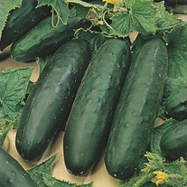 Cucumber Marketmore (Organic) Seeds