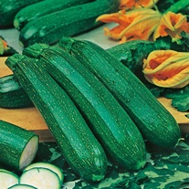 Courgette All Green Bush Seeds