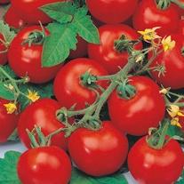 Tomato (Standard Small) Sub-Arctic Plenty Seeds