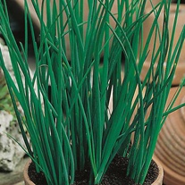Chives Seed Mat