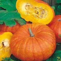 Pumpkin Rouge vif d'Etampes Seeds