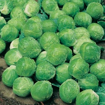 Brussels Sprout Camelot F1 Seeds