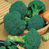 Broccoli (Calabrese) Beaumont F1 Seeds