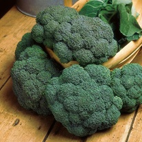 Broccoli (Calabrese) Samson F1 Seeds