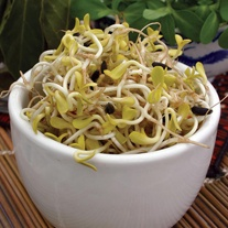 Sprouting Seed Sunflower Black Seeded