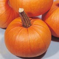 Pumpkin Small Sugar Seeds
