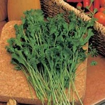 Salad Leaves Cress Wrinkled Crinkled