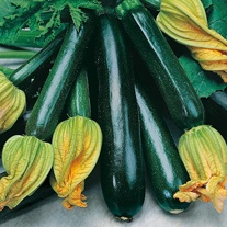 Courgette Black Beauty (Organic) Seeds
