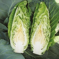 Cabbage Dutchman F1 Seeds