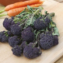 Get Growing Broccoli (Sprouting) - Summer Purple
