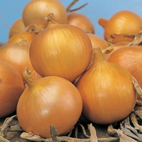 Onion (Globe) Bedfordshire Champion Seeds