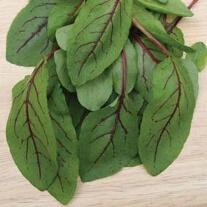 Salad Leaves Sorrel Red Veined