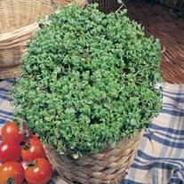 Salad Leaves Cress Fine Curled