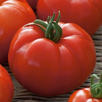 Tomato (Beefsteak)  Country Taste F1 Seeds