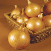 Onion Tough Ball F1 Veg Plants