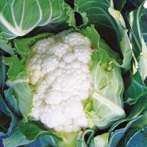 Cauliflower Amsterdam F1 Seeds