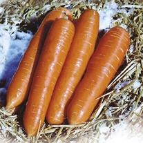 Get Growing Carrot Large Seeds