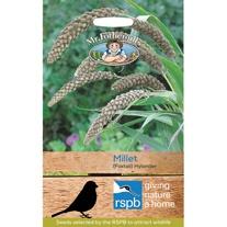 RSPB Millet (Foxtail) Hylander Seeds