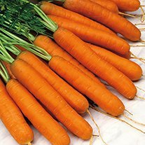 Carrot Norfolk F1 Seeds